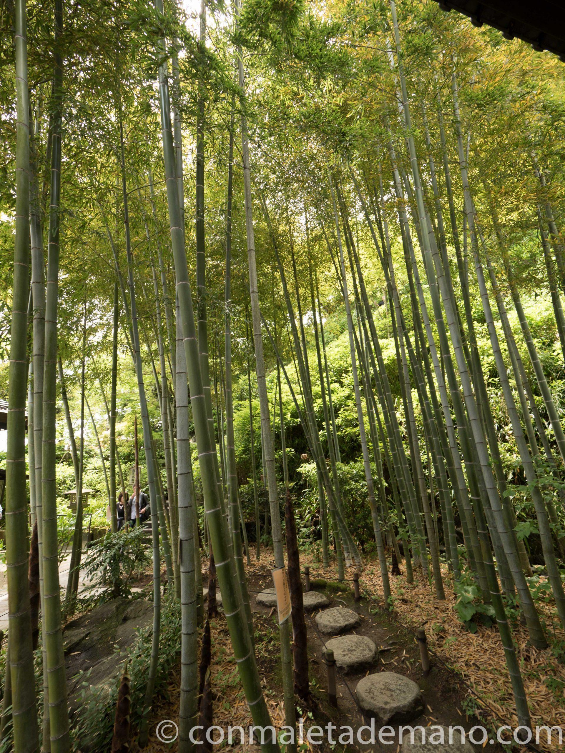 Bosque de bambú en el Hase-dera