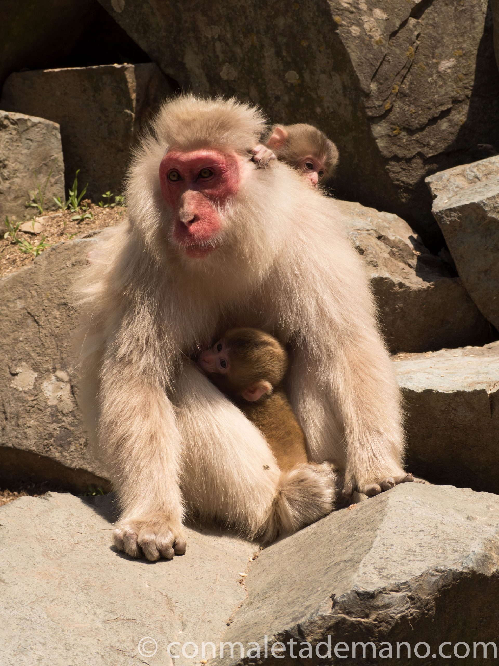 Madre con dos crías