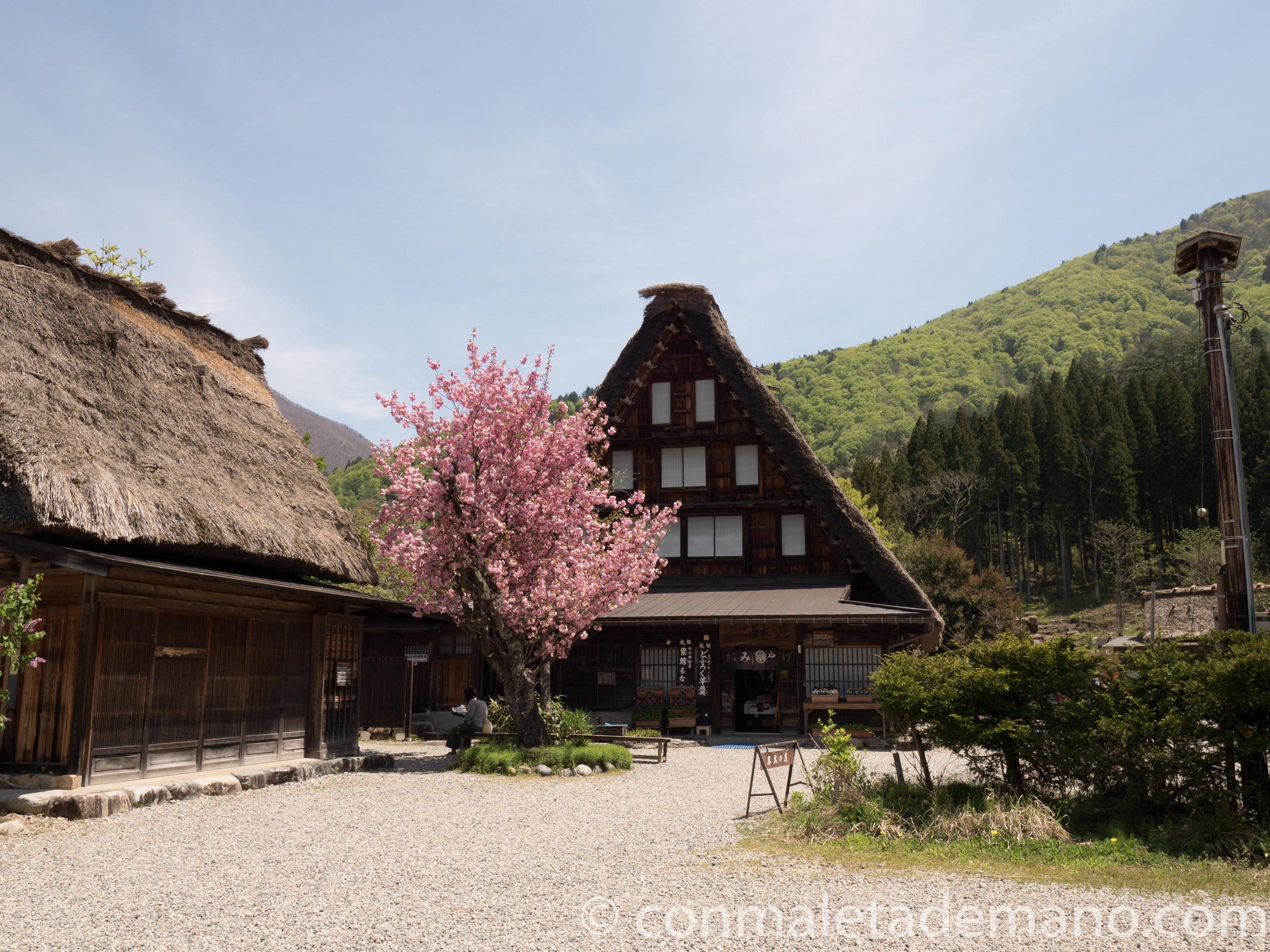 Cerezo en flor en Shirakawago