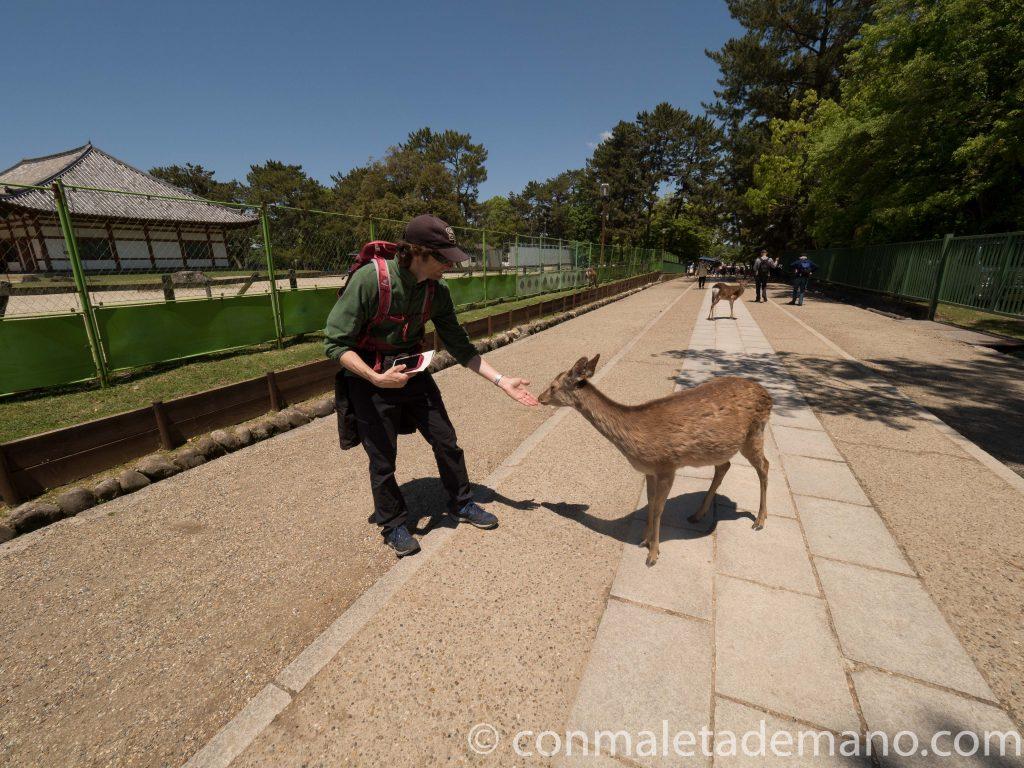 Dando de comer a los ciervos en el parque de Nara